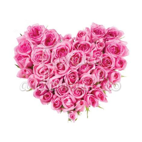 cuore-rose-rosa