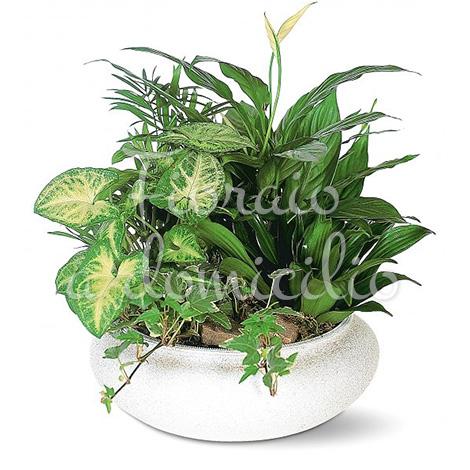 composizione-in-vaso-di-piante-miste