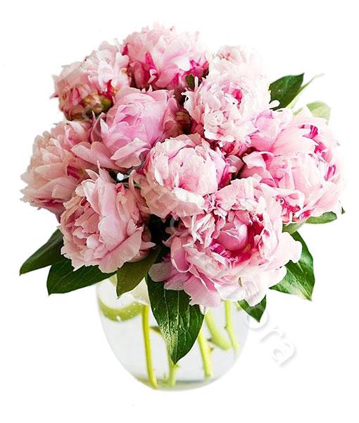 bouquet-di-peonie-rosa