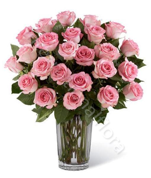 24-rose-rosa