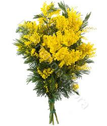 fascio-di-mimosa