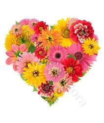 cuore-di-gerbere-fiori-colorati