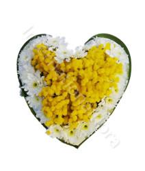cuore-di-mimose-e-margherite